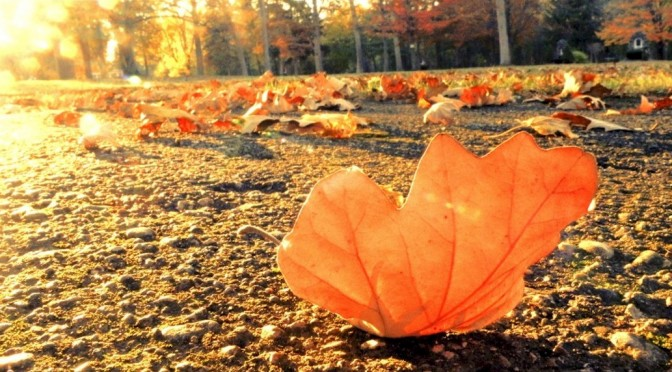 autumn-leaves-falling-from-trees-1024x640